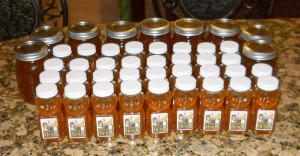 Honey_Harvest_2
