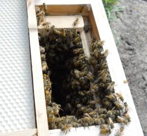 swarm5