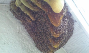 bee_hive_on_side_of_house_10_12_2016_pix2