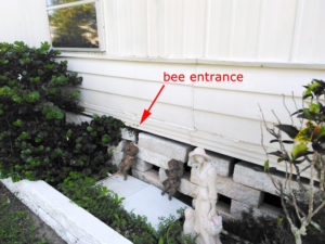 Bee entrance under mobile home.