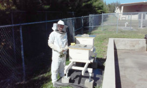 Mark checking the hives' status.