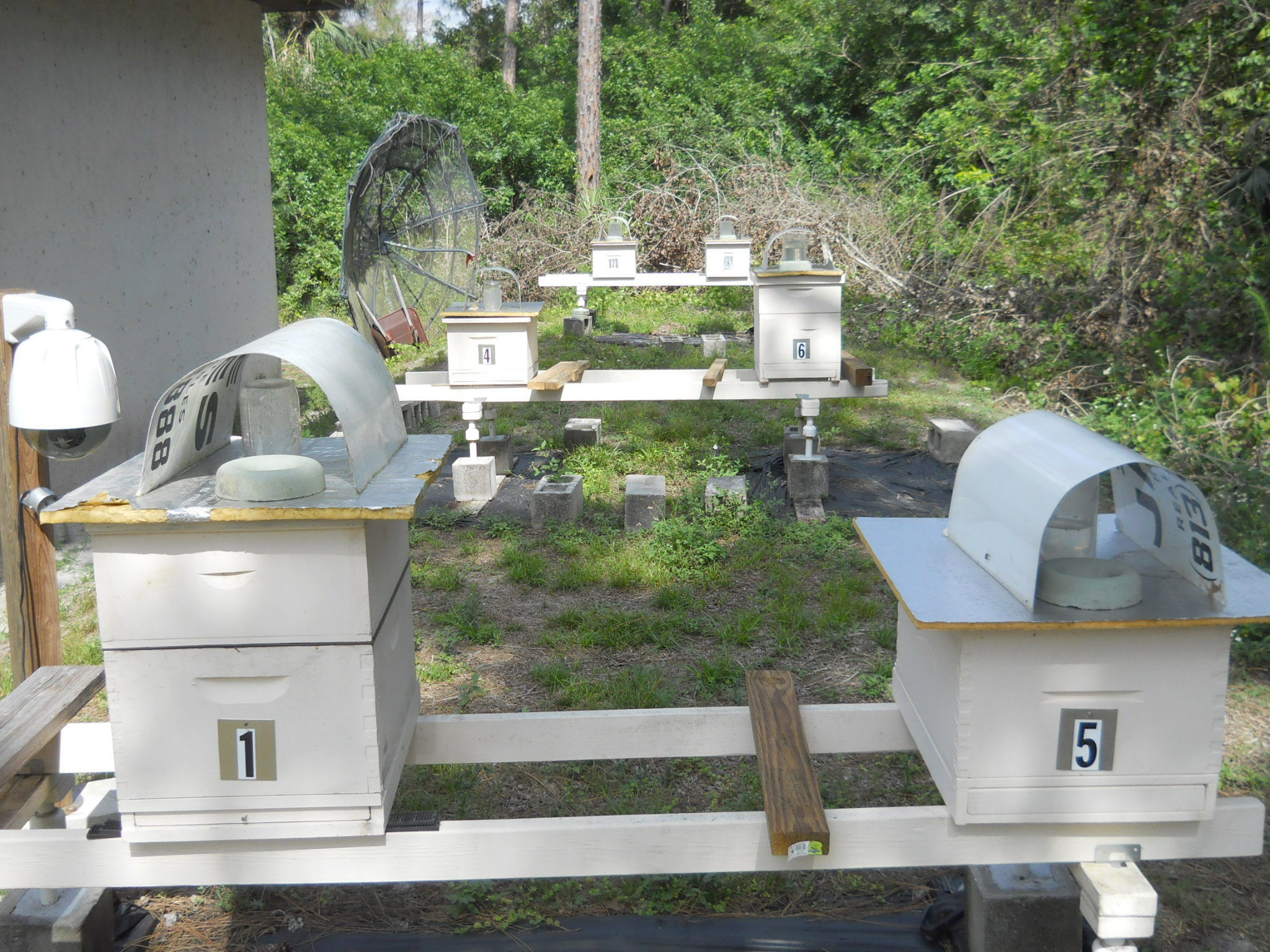 Current Bee Yard