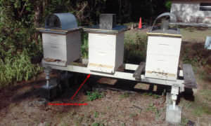 gazebo_hive_in_apiary